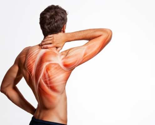 Cuidados sistema muscular